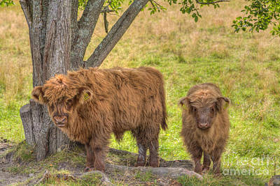 Rural Art Photograph - Young Highland by Veikko Suikkanen