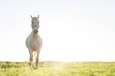 Photograph - Young Horse Trotting Ahead On The Green Grass Field. by Michal Bednarek