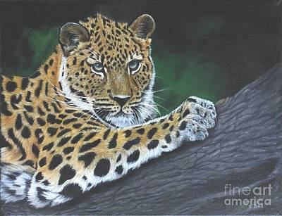 Cat Painting - Young Leopard by Sid Ball