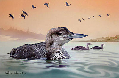 Loon Digital Art - Young Loon On Lake by William Hay