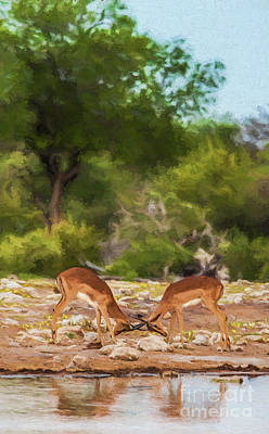 Digital Art - Young Male Impalas Sparring by Liz Leyden