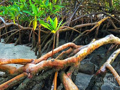Photograph - Young Mangrove Plant by Laura Forde