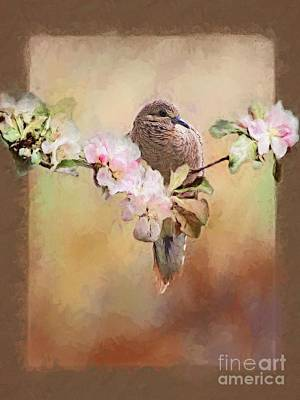 Young Morning Dove Art Print