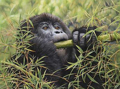 Painting - Young Mountain Gorilla by Alan M Hunt