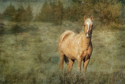 Photograph - Young Palomino Bachelor Stallion by Belinda Greb