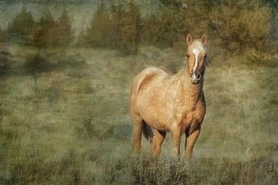 Photograph - Young Palomino Bachelor Stallion by Belinda Greb