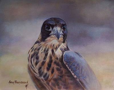 Young Peregrine Falcon Art Print