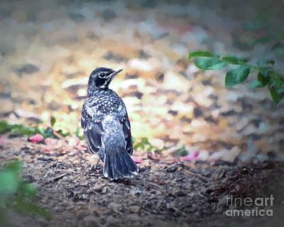 Photograph - Young Robin by Kerri Farley