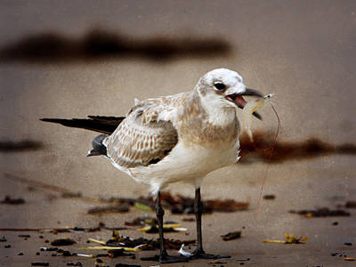 Photograph - Young Seagull Eating Shrimp by Charles McKelroy