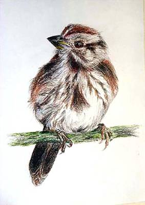 Art Print featuring the painting Young Sparrow by Sibby S