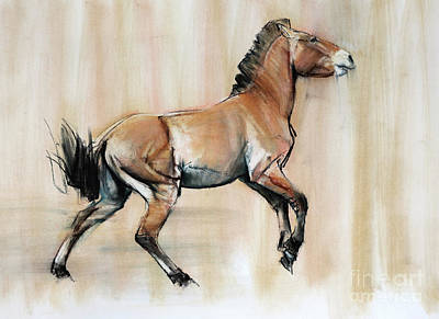 Young Stallion Art Print