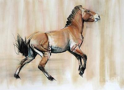 Young Stallion Art Print