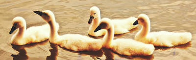 Photograph - Young Swans by Pixabay