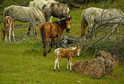 Photograph - Young Wild Horse by Dale Stillman