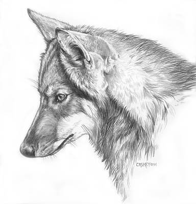Caskey Wall Art - Drawing - Young Wolf by Bethany Caskey