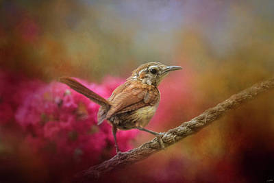 Photograph - Young Wren In The Garden by Jai Johnson