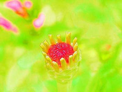 Photograph - Young Zinnia Opening In Watercolor by Belinda Lee