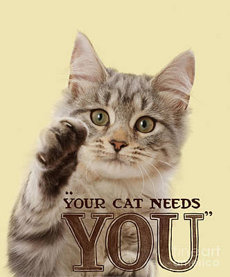 Photograph - Your Cat Needs You by Warren Photographic