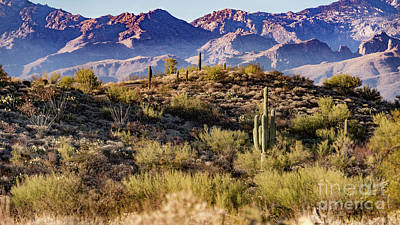 Photograph - Your Catalina Mountains by David Levin