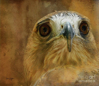 Red Tail Hawk Digital Art - Your Majesty by Lois Bryan