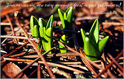 Photograph - Your Mercies Are New by Elizabeth Babler