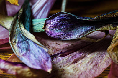 Photograph - Your True Colours by Sandra Parlow