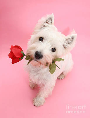 Photograph - Your Valentine Every Day by Warren Photographic