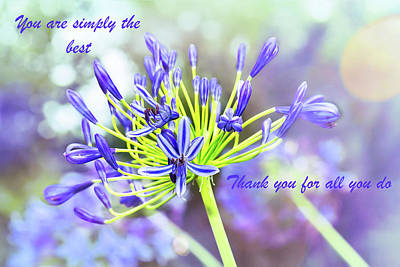 Photograph - You're Simply The Best Agapanthus by Kay Brewer