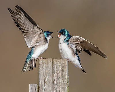 Swallow Photograph - You're Wrong And I'm Right by Morris Finkelstein