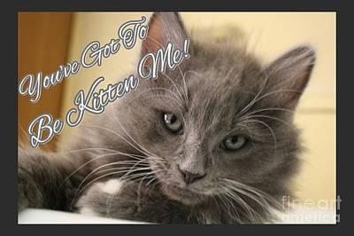 Fuzzy Digital Art - You've Got To Be Kitten Me by Scott D Van Osdol