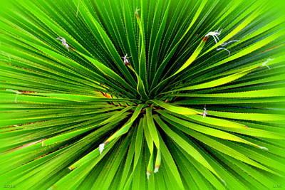 Photograph - Yucca 2 by Lisa Wooten