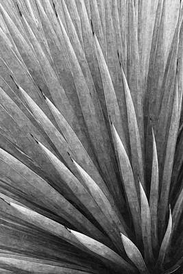 Photograph - Yucca Abstract In Black And White by Ram Vasudev