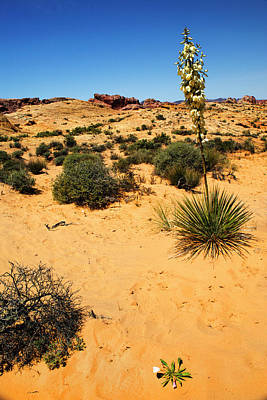 Photograph - Yucca And Desert Primrose In The Valley Of Fire by Frank Wilson