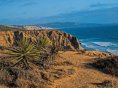 Photograph - Yucca At Torrey Pines by Alana Thrower
