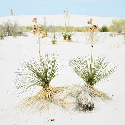 Photograph - Yucca Couples by KJ Swan