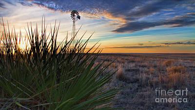 Photograph - Yucca Dawn by Jim Garrison