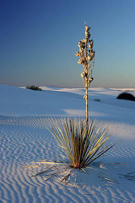 Photograph - Yucca by Eric Foltz