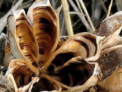 Thomas Kinkade - Yucca  FLO R 23 by Sierra Dall