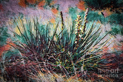 Photograph - Yucca Gone Wild by Jon Burch Photography