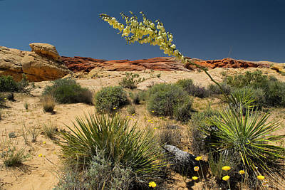 Photograph - Yucca In The Valley Of Fire by Frank Wilson