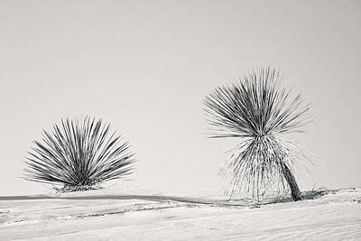 yucca in White sands Print by Ralf Kaiser