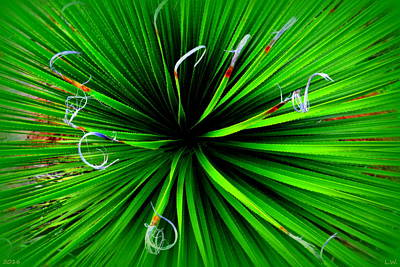 Photograph - Yucca by Lisa Wooten