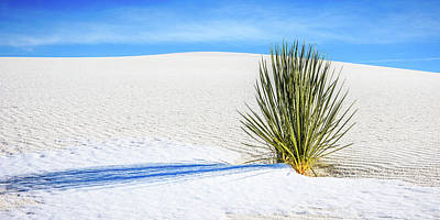 Winter Photograph - Yucca by Marla Hunt