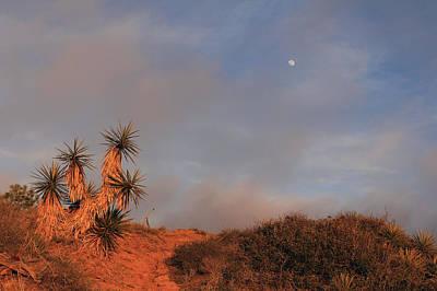 Photograph - Yucca Moon by Robin Street-Morris
