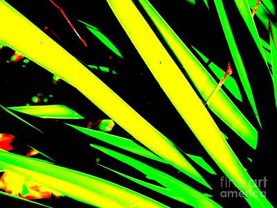 Photograph - Yucca Plant Abstract by Tim Townsend