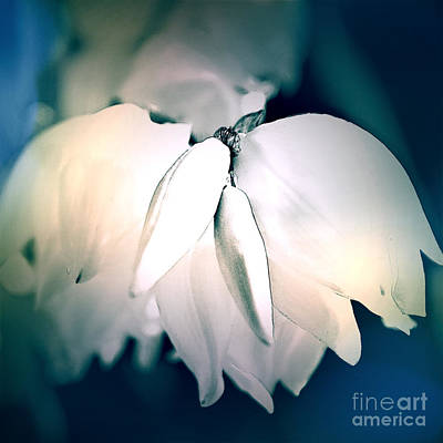 Photograph - Yucca Plant Flowers Cool Tones by Sherry Hallemeier