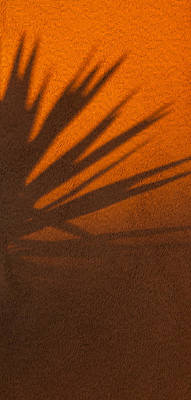 Photograph - Yucca Shadow by Dennis Eckel