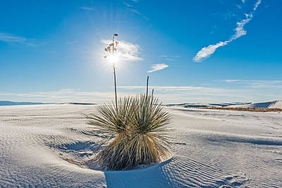 Yucca Sunburst - White Sands National Monument Photograph Art Print by Duane Miller