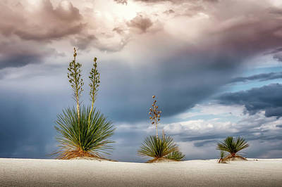 Photograph - Yucca Three by James Barber