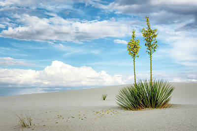 Photograph - Yucca Twins by James Barber